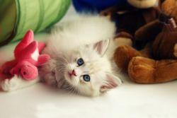 Игрушки для кошек своими руками. главная