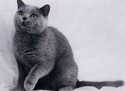 Имена для кота греческие