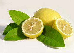 Чем полезен лимон для организма