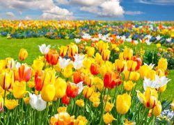 К чему снятся цветы в годе