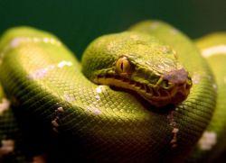 люди под знаком змееносца
