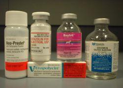 лечение воспаления яичников антибиотиками