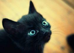 Как можно назвать котёнка мальчика черного цвета