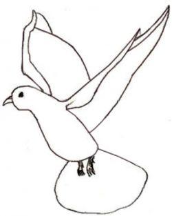 Как поэтапно нарисовать карандашом голубя детям 4