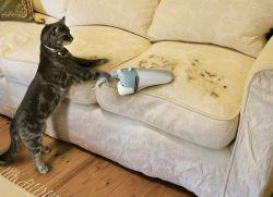 почему у кота неприятный запах из пасти