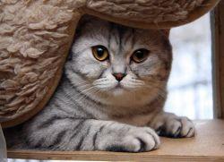 Клички кошек девочек - МирКошек Рф
