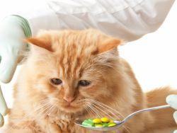 микоплазмоз у кошек 1