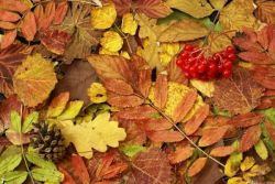 Осень в детском саду оформление