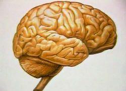 отек мозга пизнаки: