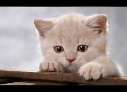 Что дать коту от поноса
