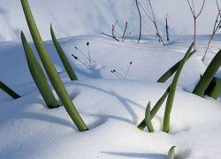 Осенняя посадка лука под зиму