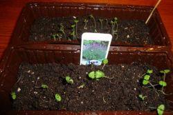 Что такое стратификация семян
