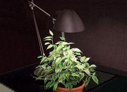Комнатные растения, не требующие света