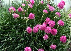 Цветы цветущие все лето фото