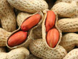 арахис выращивание