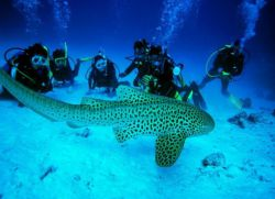 Водятся ли акулы в тайланде