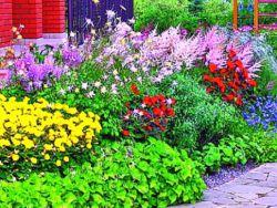 Низкорослые многолетники, цветущие все лето