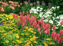 Цветы однолетники цветущие все лето фото и название