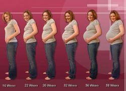 Триместры беременности по неделям – таблица