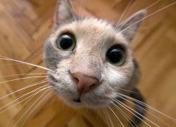 У кошки слезится глаз что делать