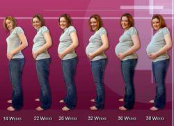 Вес ребенка в 20 недель