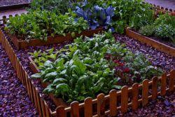 Що посадити в городі