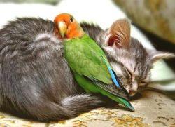 Волнистые попугаи содержание и уход