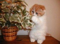 Ядовитые комнатные растения для кошек