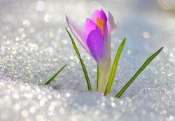 Загадки о весне для дошкольников