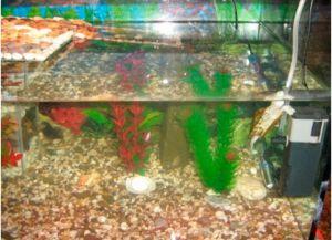 Как в аквариуме сделать островок для черепахи своими руками фото 904