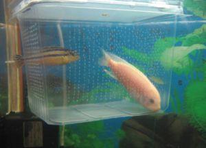 Аксессуары для аквариума3