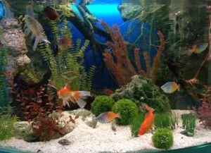 Аксессуары для аквариума8