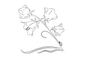 как нарисовать цветок поэтапно 6