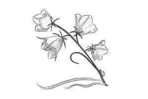 как нарисовать цветок поэтапно 7