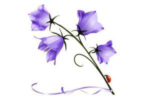 как нарисовать цветок поэтапно 8