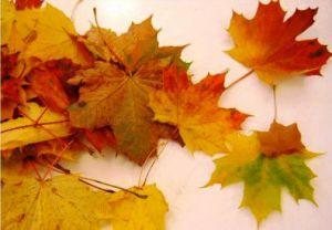 Осенний букет своими руками для детского сада 1