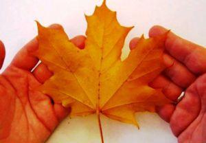 Осенний букет своими руками для детского сада 2