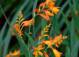 засухоустойчивые растения_9
