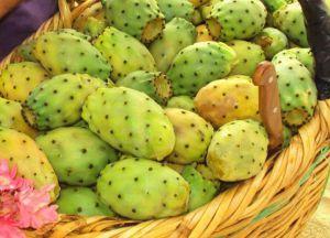 съедобные плоды кактуса 2