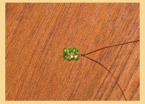 денежное дерево из бисера3