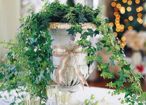 Самые красивые комнатные цветы