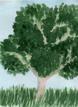 Как нарисовать дерево 16