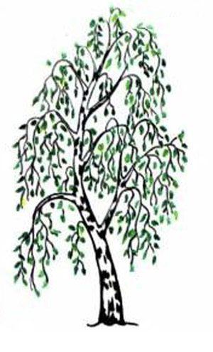 Как нарисовать дерево 5