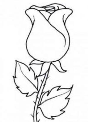 Как нарисовать поэтапно розу 18
