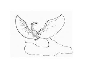 как нарисовать птицу 15