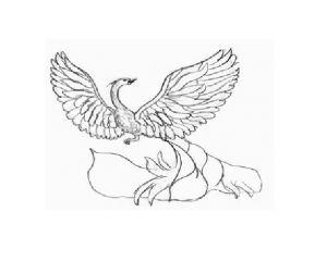 как нарисовать птицу 17