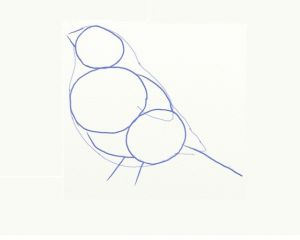 как нарисовать птицу 3