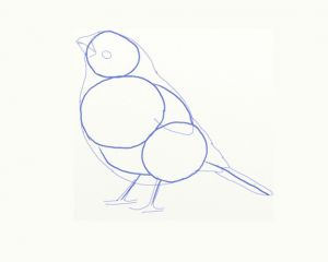 как нарисовать птицу 4