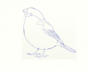 как нарисовать птицу 5