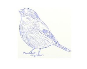 как нарисовать птицу 6